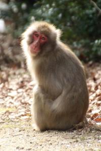 monkey-03