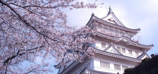 千葉城桜sm_a_20150502-033446