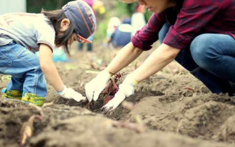 秋の芋掘り大会レポート2016