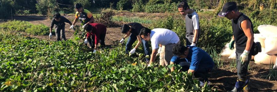 マレーシアの方たちと芋掘り体験