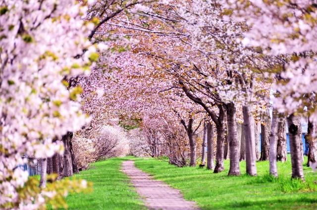 春ならではのあそび