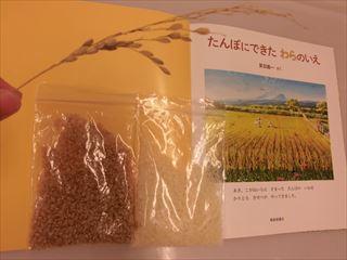 食育「お米のできるまで」